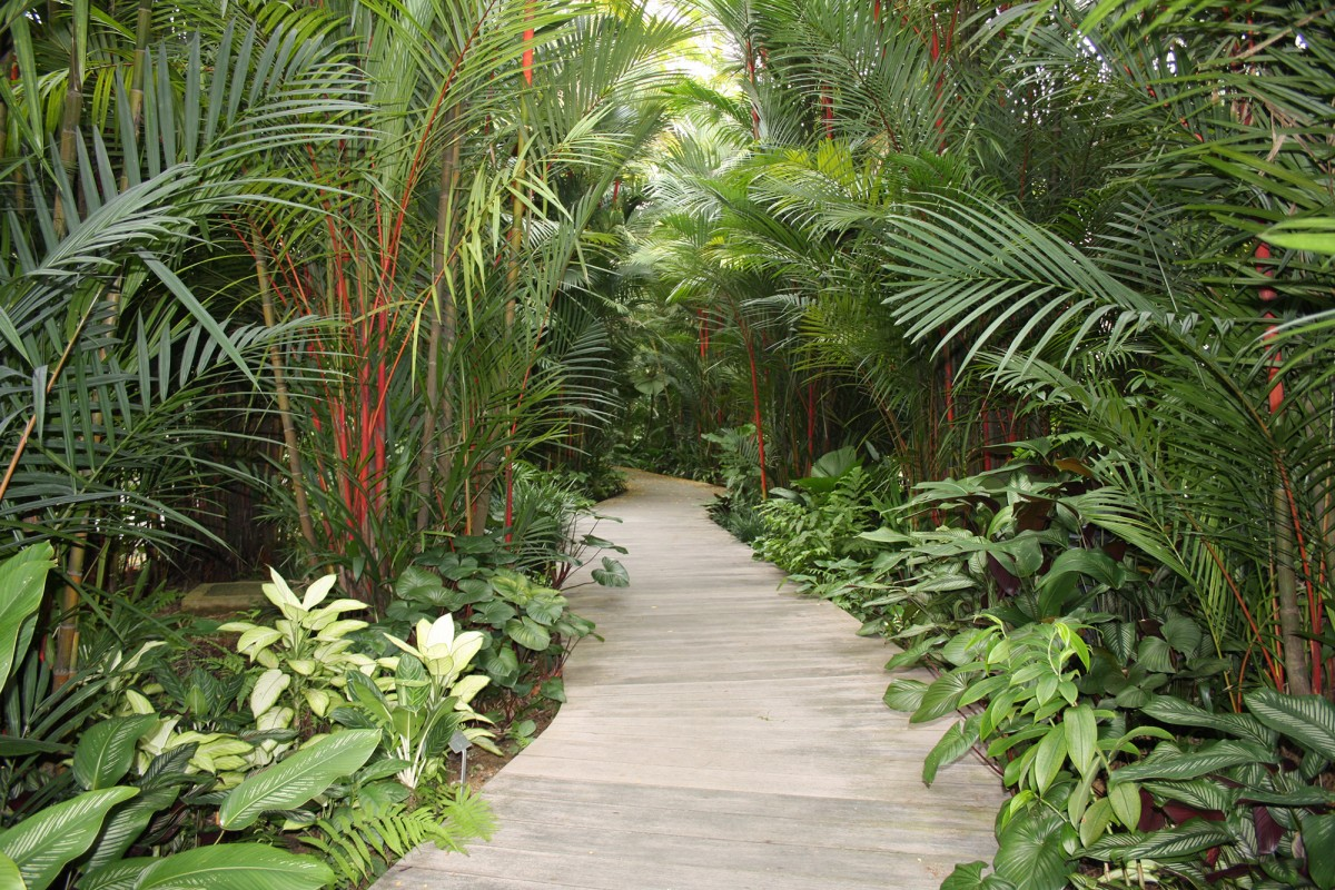Jardin Botanique de Singapour – Singapour